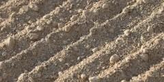 Mise en valeur des sols salés