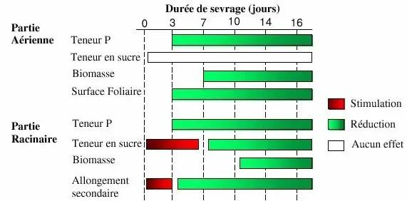 Figure 5 : Synthèse bibliographique sur les effets d'un sevrage en P sur la physiologie d'un peuplement de maïs durant 16 jours ( Maire,2005 ).
