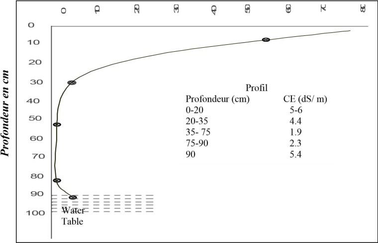 Figure n 03 : Profil salin lié à la présence d'une nappe profonde (MOHAMED et AMER in CHERBUY 1991)