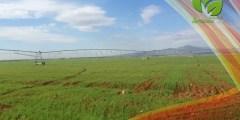 خدمة وإعداد الأرض لزراعة القمح