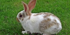 كل ما تريد ان تعرفه عن الأرانب