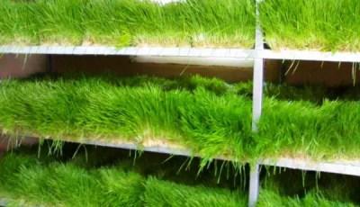 كتاب زراعة الانسجة النباتية pdf