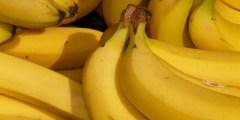 خصائص البيئة المناسبة لزراعة الموز