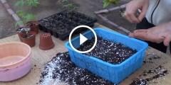 فيديو .. كيفية زراعة بذور النباتات