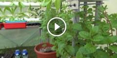 فيديو .. الزراعة المائية
