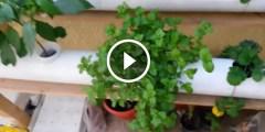فيديو .. شرح نظام الزراعة المائية