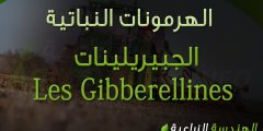 الجبيريلينات Les Gibberellines