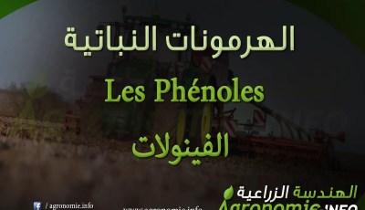 الفينولات Les Phénoles