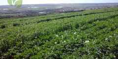 أهمية القطاع الزراعي في الجزائر