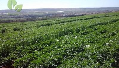 تحمل المحاصيل للملوحة Crop Tolerance to Salinity
