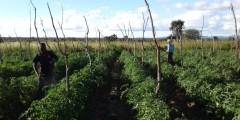 السمات البنائية ـ النمطية العامة للإنتاج الزراعي في الدول النامية