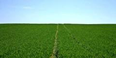 السياسات الزراعية