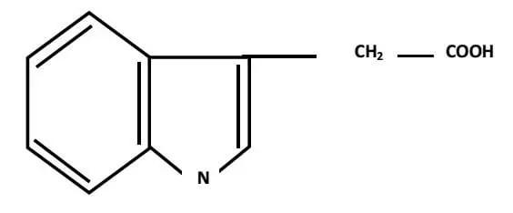 الشكل) :(02الصیغة الكیمیائیة لحمض الأندول الخلي AI