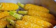 فوائد نبات الذرة