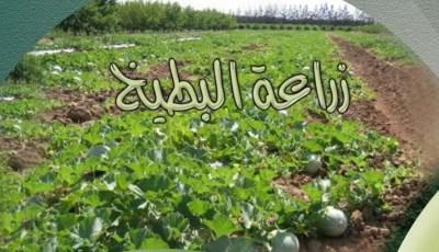 كتاب زراعة البطيخ