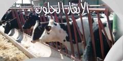 كتاب الأبقار الحلوب