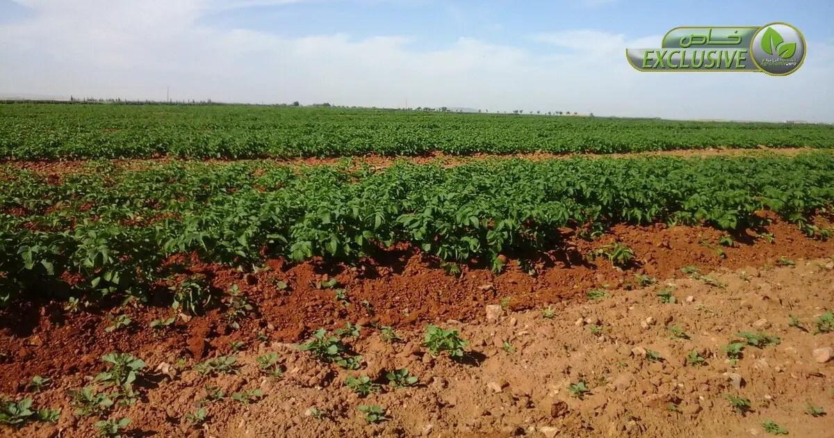 تأثير الأسمدة العضوية في خصائص التربة