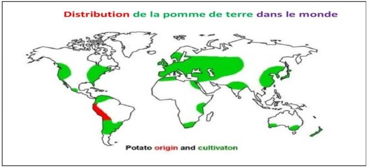 خريطة رقم (1) : أصل وتوزع زراعة البطاطا في العالم