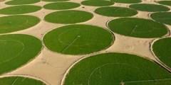 زراعة البطاطا في الجزائر وولاية الوادي
