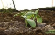 تأثير الأسمدة في نمو وإنتاجية النبات