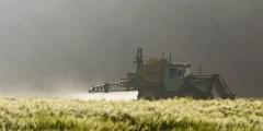 أهم المبيدات الزراعيه للقمح والشعير