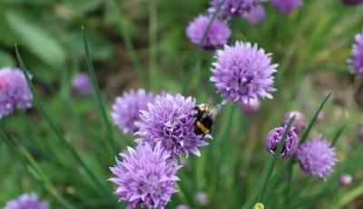 المقومات الأساسية اللازمة لإنجاح زراعة وإنتاج النباتات الطبية والعطرية