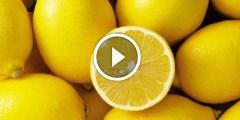 فيديو .. زراعة بذور الليمون في المنزل