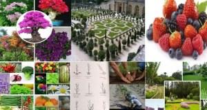 مبادئ علم البستنة وهندسة الحدائق