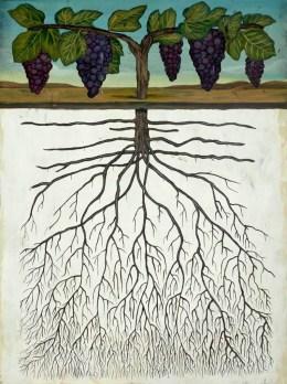 المجموع الجذري Root system: