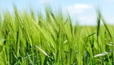 الدورات الزراعية