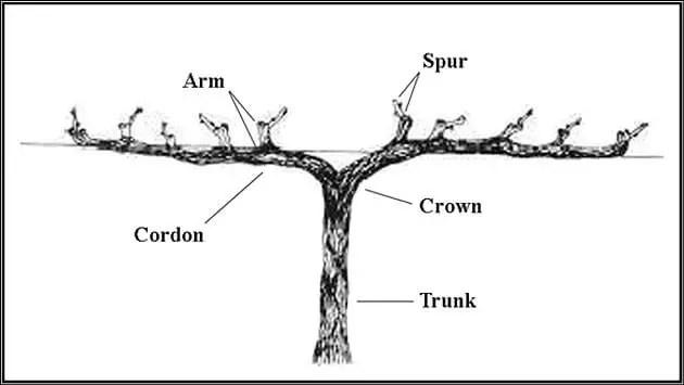 الأذرع Arms