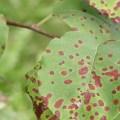 علم أمراض النبات