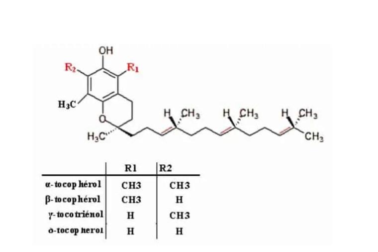 شكل 1:التركيب الكيميائي لمختلف أنواع tocopherols