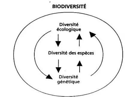 شكل (1):تصور التنوع الحيوي يعني مجموع التفاعلات بين تنوع الأنواع ، تنوعها الجيني و تنوع الأنظمةالبيئية(1995) Younès وCastri في(2001) Mounolou وLêveque.
