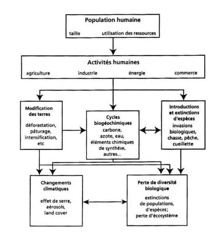 شكل (3) :نموذج تصوري يوضح التأثيرات المباشرة و الغير مباشرة على الغلاف الحي.(1991,Lubchenko)