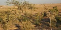 مذكرة تخرج .. تآكل التنوع النباتي في منطقة قسنطينة