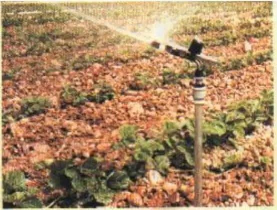 شكل(1) يوضح حقن الأسمدة في شبكة الري بمعدلات منتظمة( حتى توزع الاحتياجات السمادية بانتظامعلى جميع النباتات التي تروى في نفس الوقت).