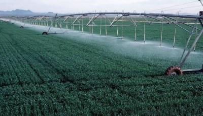 الاستهلاك المائي لبعض المحاصيل الصيفية