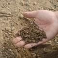 تأثير درجة حرارة التربة على زراعة بعض المحاصيل الصيفية فطريات التربة والتلوث بالمعادن الثقيلة