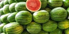 درجة الحرارة الدنيا لزراعة بعض المحاصيل الصيفية