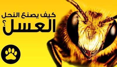 كيف يصنع النحل العسل؟ ستفاجئك الطريقة حتماً!