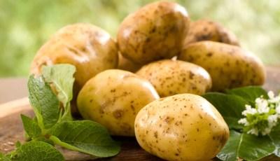 أهمية البطاطا من الناحية الغذائية والصحية