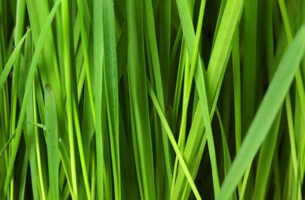 Как посадить газон своими руками: советы и рекомендации