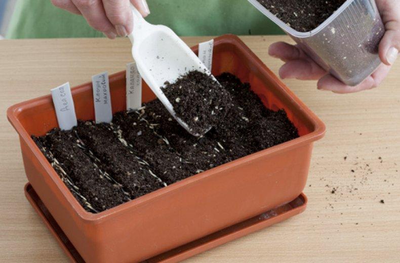Какие цветы можно сажать семенами под зиму. Главные правила посадки и ухода за бархатцами Можно ли посадить под зиму бархатцы