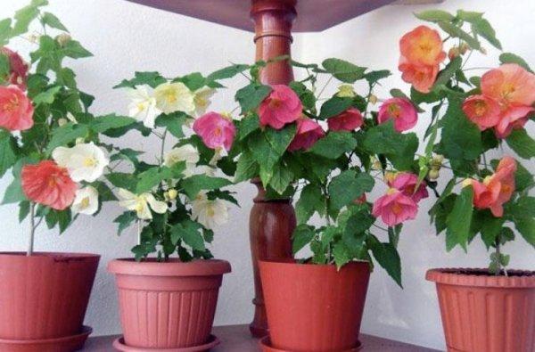 Самые красивые комнатные (домашние) растения: описание ...
