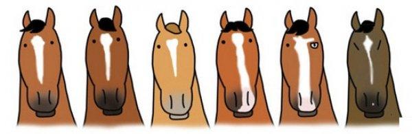 Клички для лошадей мальчиков и девочек. Красивые русские ...