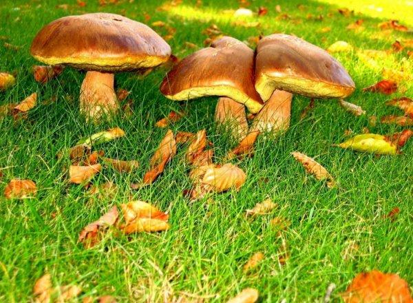 Осенние съедобные грибы: фото и названия, какие грибы ...