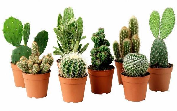 Комнатные (домашние) растения: фото и названия