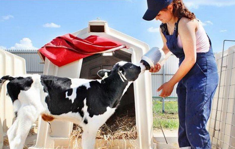 Pierde în greutate Astfel brânza de vaci susține dieta înainte de somn
