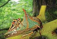 insectos mas extraños del mundo